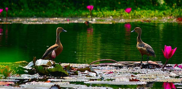 Goa-Flick-Kumaravel
