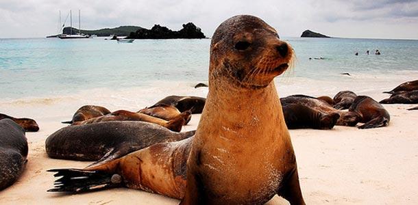 Galapagossaarella on monenlaisia eläimiä