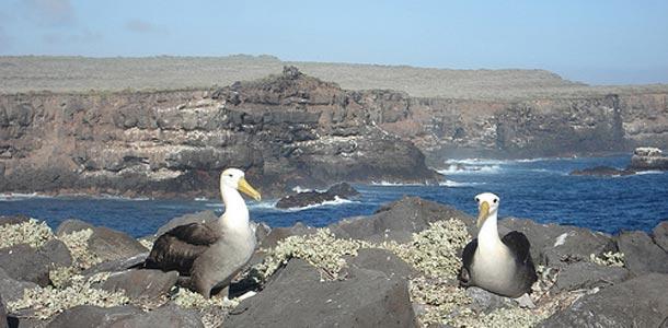 Galapagossaareilla yövytään usein laivassa