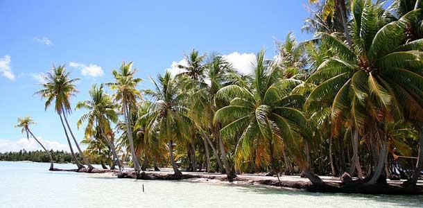 Palmuranta Tahitilla