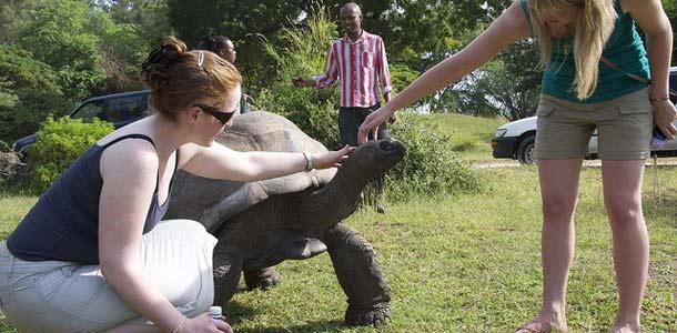 Jättiläiskilpikonna Mombasassa