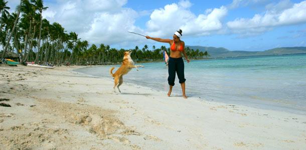 Dominikaaninen-koira