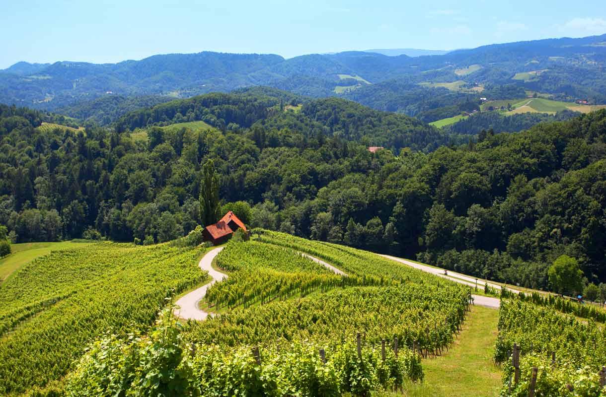 Slovenia on nouseva viinimaa.