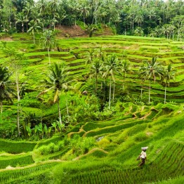 Pelto Balilla