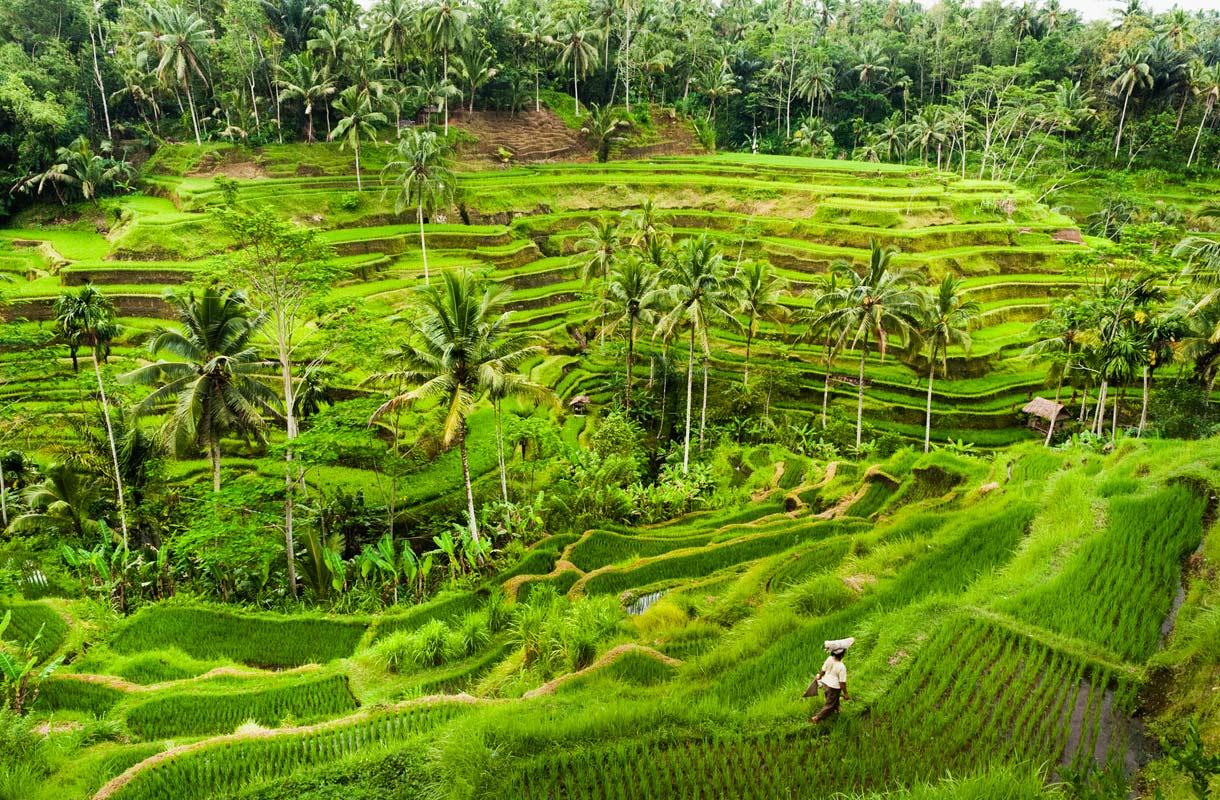 Maisema Balilla
