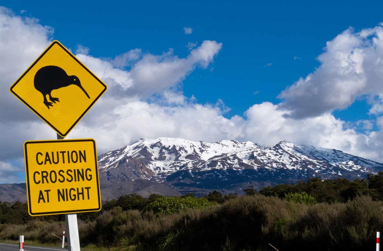 Kiivi-lintu Uudessa-Seelannissa